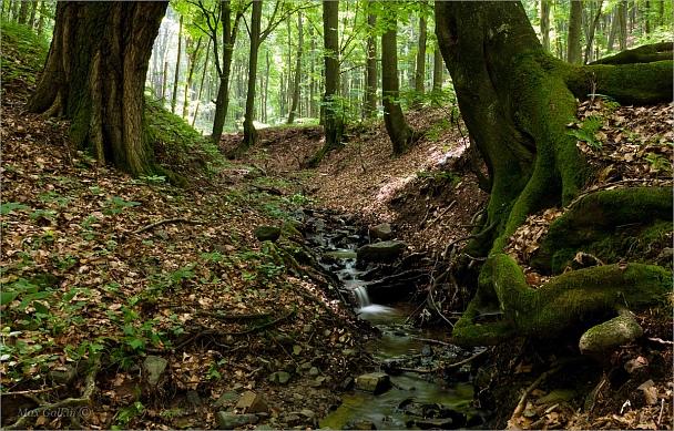 Прикрепленное изображение: Лесной-ручей.jpg