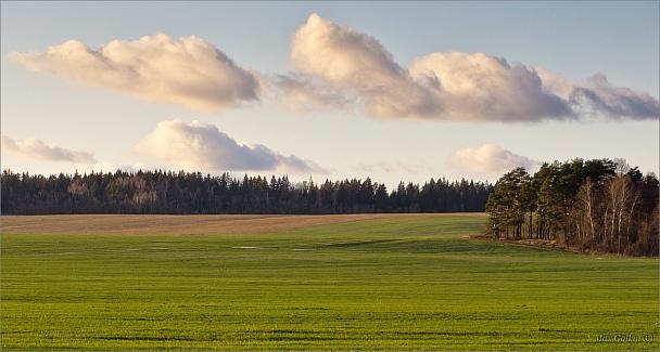 Прикрепленное изображение: Опушка-поле-облака.jpg