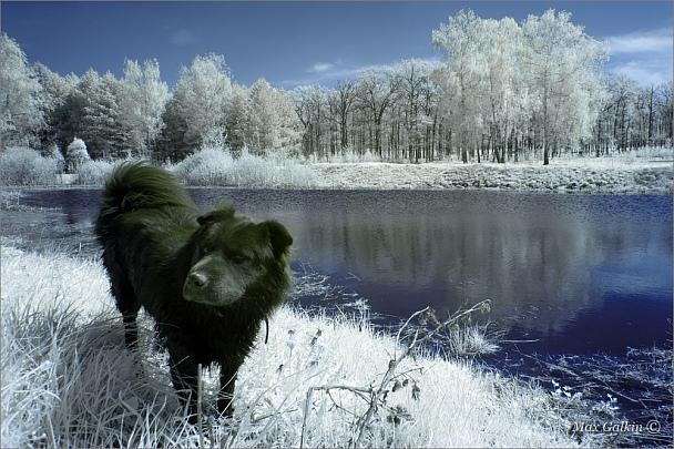 Прикрепленное изображение: Собака Баскервилей.jpg