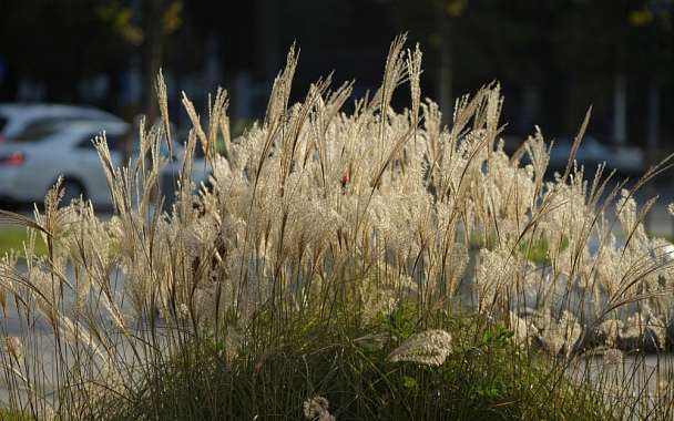 Прикрепленное изображение: City herbs.jpg