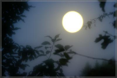 Прикрепленное изображение: 090905_8792_ViewSoftDacha_Moonglow_lr.jpg