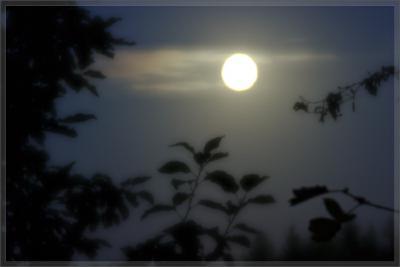 Прикрепленное изображение: 090905_8801_ViewSoftDacha_Moonglow_lr.jpg