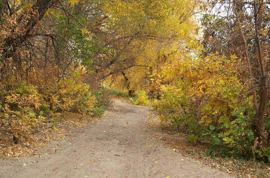 Прикрепленное изображение: Осенний лес.jpg