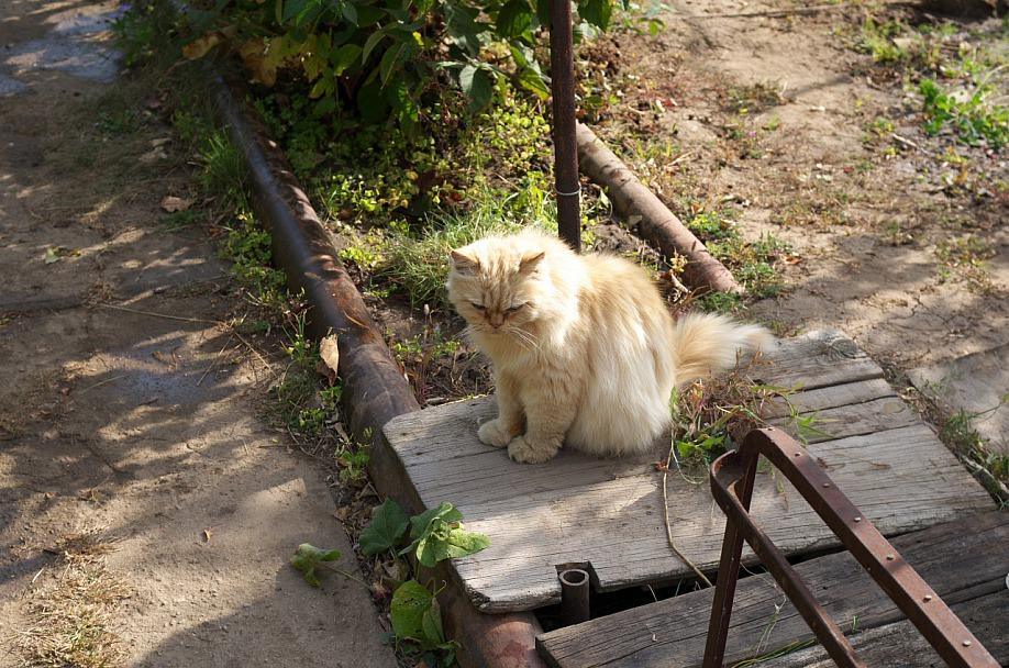 Прикрепленное изображение: Кот на даче.jpg