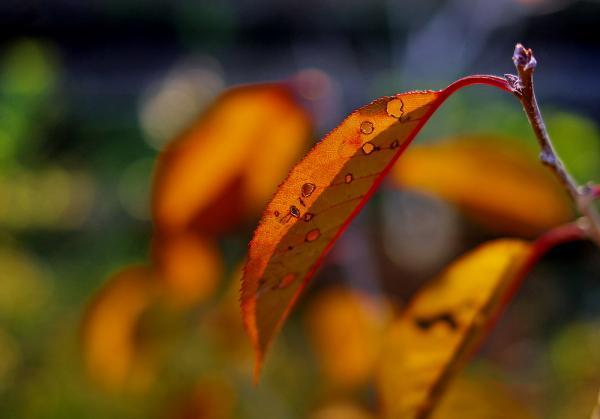 Прикрепленное изображение: Дырявый листок1.jpg