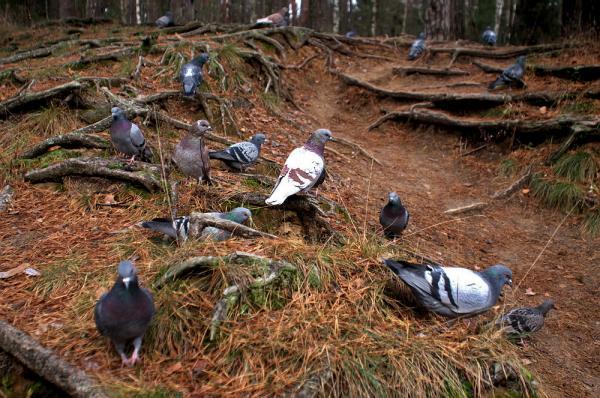Прикрепленное изображение: Встреча в лесу.jpg