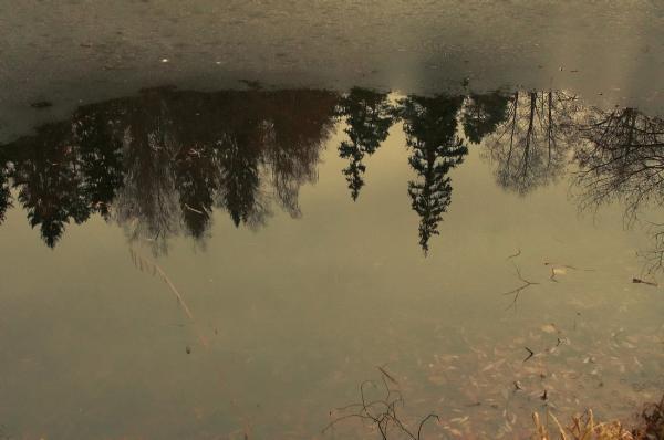 Прикрепленное изображение: Замерзающий пруд.jpg