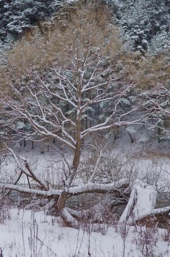 Прикрепленное изображение: Зима1.jpg