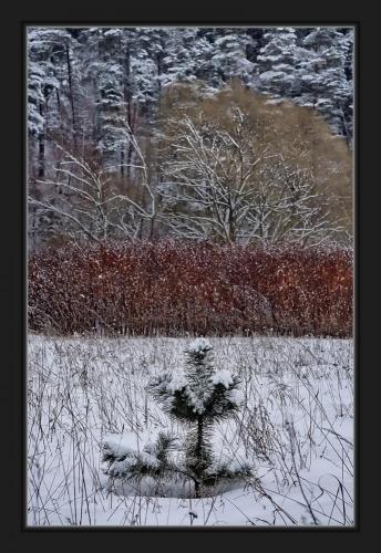Прикрепленное изображение: После снегопада.jpg