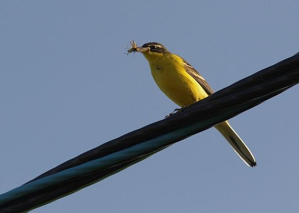 Прикрепленное изображение: Желтая.JPG