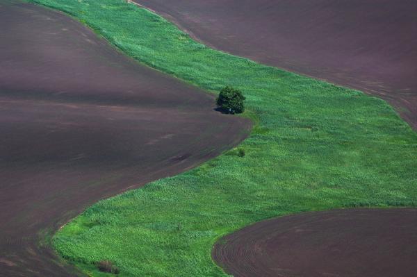 Прикрепленное изображение: Зеленая река....jpg