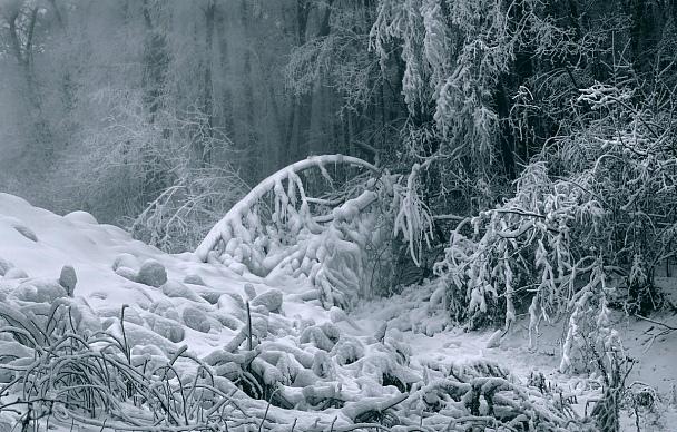 Прикрепленное изображение: Сказка новогднего леса........Gen..jpg