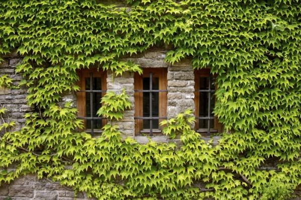 Прикрепленное изображение: window.jpg