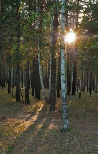 Прикрепленное изображение: Вечерний-лесок.jpg