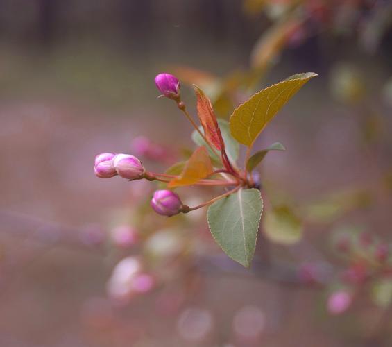Прикрепленное изображение: Цвет-весны.jpg