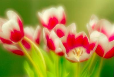 Прикрепленное изображение: Flowers002_work.jpg
