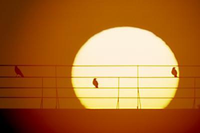 Прикрепленное изображение: sunset8.jpg