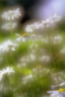 Прикрепленное изображение: Flowers004_work.jpg