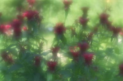 Прикрепленное изображение: Flowers007_work.jpg