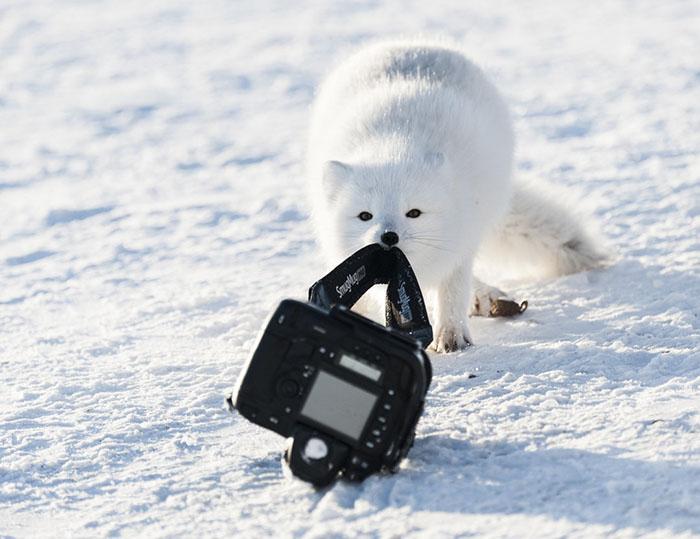 Прикрепленное изображение: funny-animals-pics-comedy-wildlife-photography-awards-5-5b07b85a374ce__700.jpg