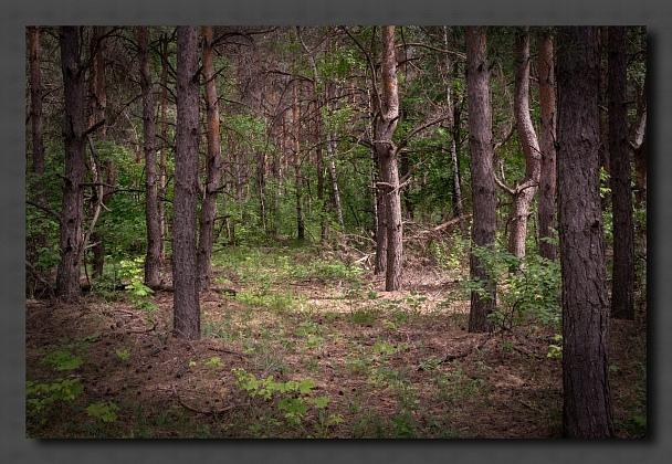 Прикрепленное изображение: В лес.jpg