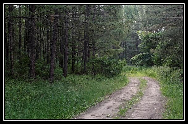 Прикрепленное изображение: В лес на машине.jpg