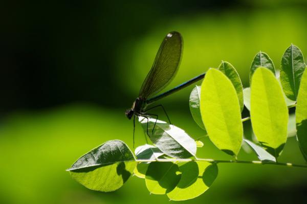 Прикрепленное изображение: Green.jpg