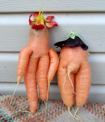 Картинки, любовь морковь картинки смешные