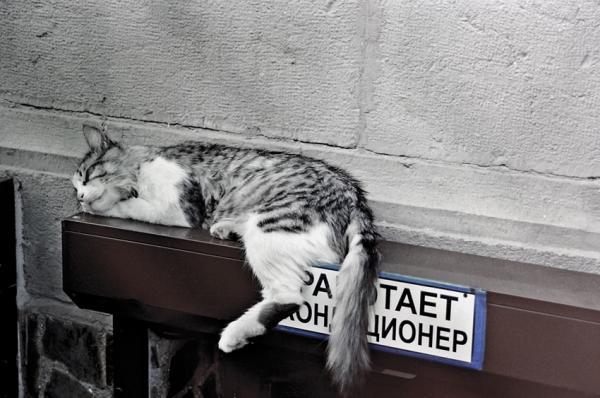 Прикрепленное изображение: кота на сайт.jpg