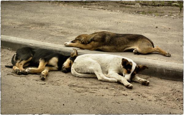 Прикрепленное изображение: пёс.jpg