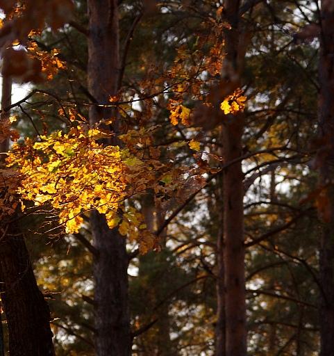 Прикрепленное изображение: Осень в лесу.jpg