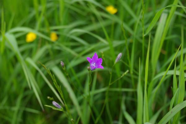 Прикрепленное изображение: Flower new small.jpg