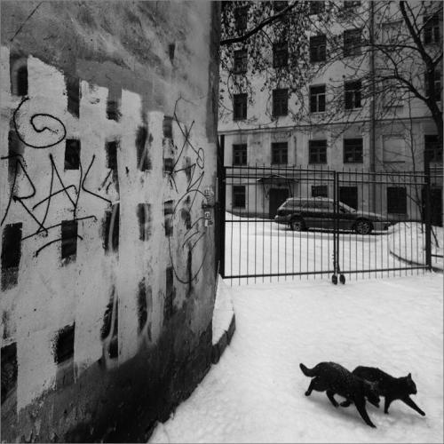 Прикрепленное изображение: knn_Cats_730.jpg