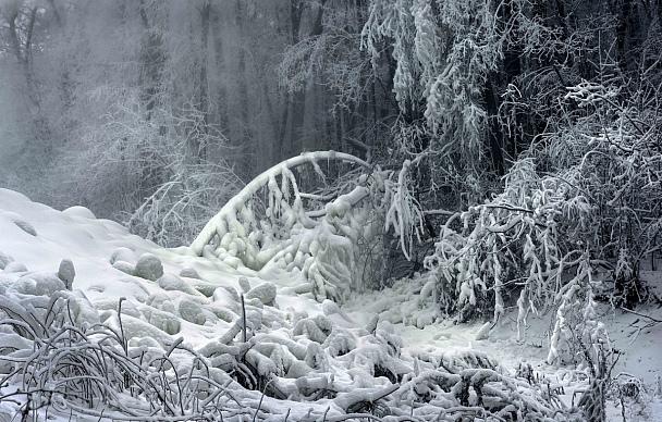 Прикрепленное изображение: Сказка новогднего леса..........jpg