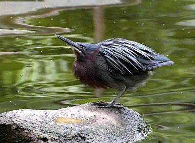 Прикрепленное изображение: bird.jpg