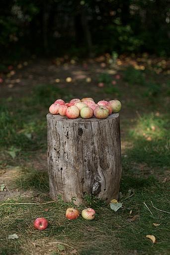 Прикрепленное изображение: яблочки  JPG.jpg
