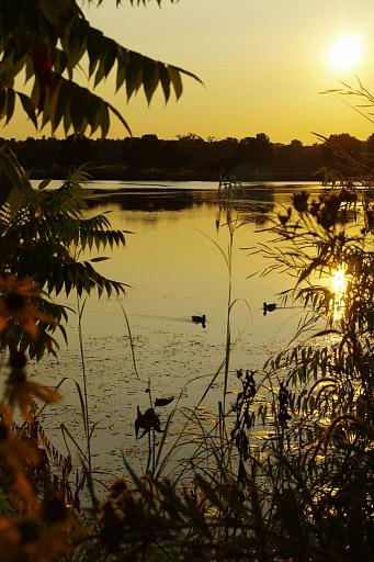 Прикрепленное изображение: Ducks_SM.jpg