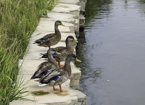 Прикрепленное изображение: birding.jpg