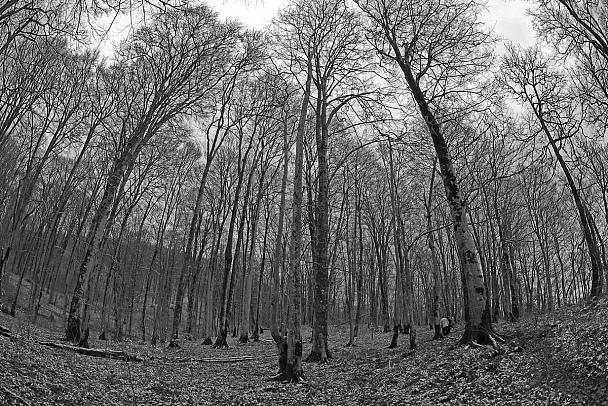 Прикрепленное изображение: forest.jpg