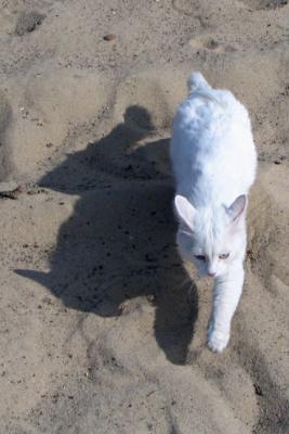 Прикрепленное изображение: cat_and_shadow.jpg