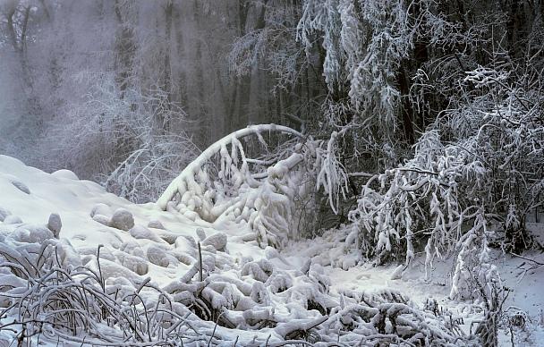 Прикрепленное изображение: Сказка новогднего леса........._ed.jpg