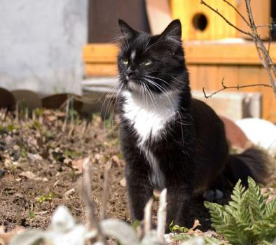 Прикрепленное изображение: cat_web.jpg