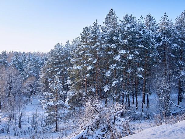 Прикрепленное изображение: forest04_1024.jpg