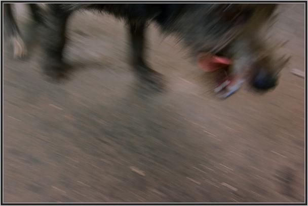 Прикрепленное изображение: Собака.jpg