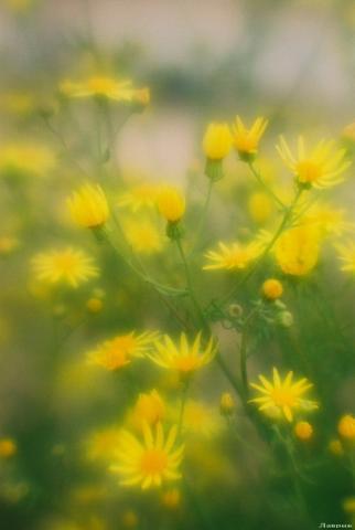 Прикрепленное изображение: цветок.dvjpg.jpg