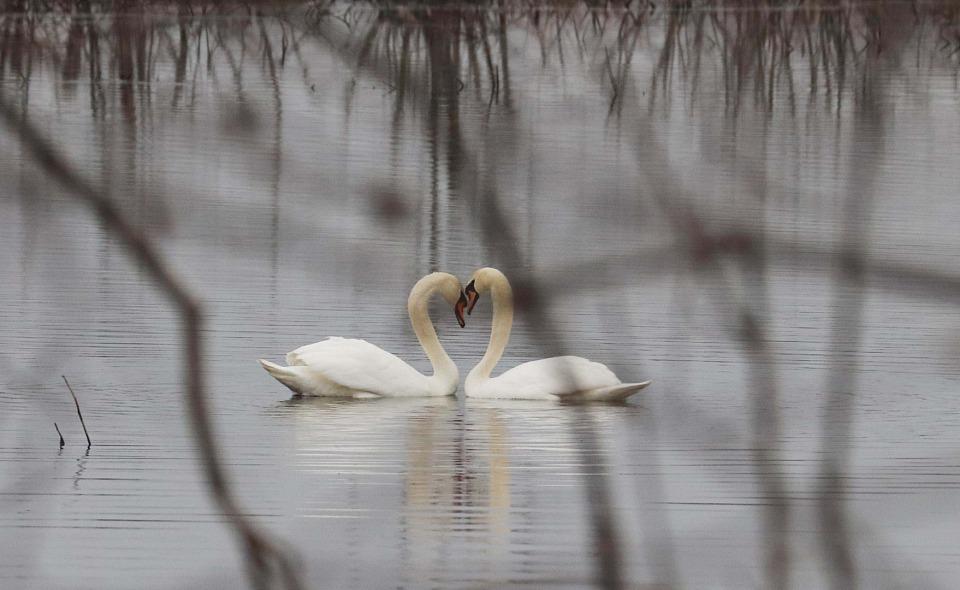 Прикрепленное изображение: Любовь.jpg