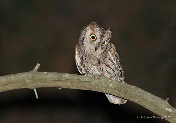 Прикрепленное изображение: Мне в лесу она кричала_ сплю-сплю-сплю.jpg
