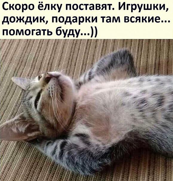 Прикрепленное изображение: Котик.jpg