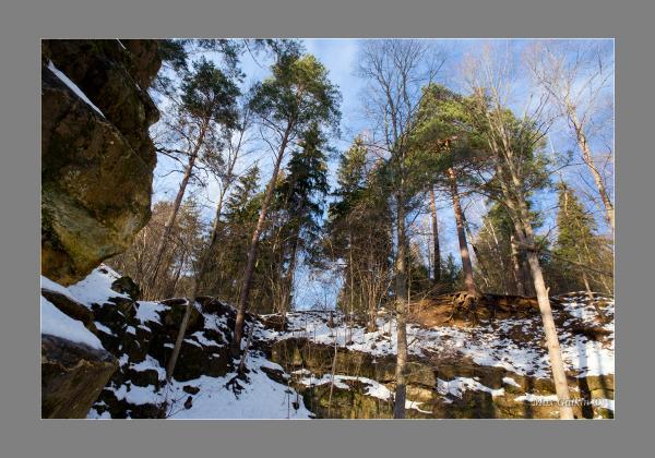 Прикрепленное изображение: In the pine forest.jpg