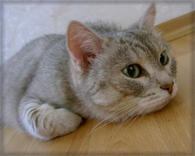 Прикрепленное изображение: Cat_frame.jpg